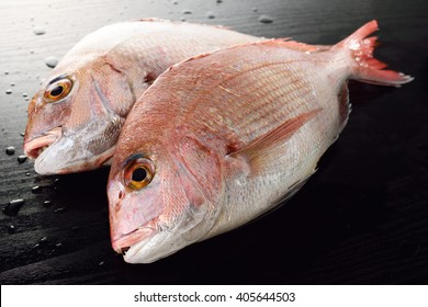 japanese red sea bream