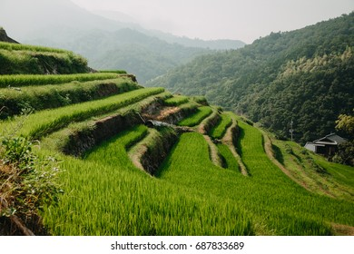 Japanese rice terrace paddies in mountains