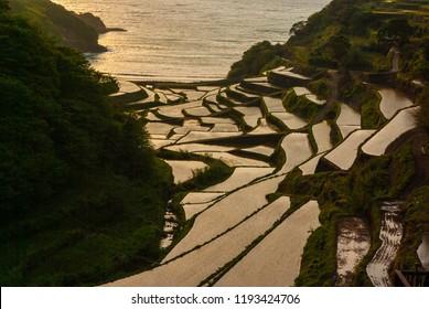 Japanese Rice-terrace fields in Saga