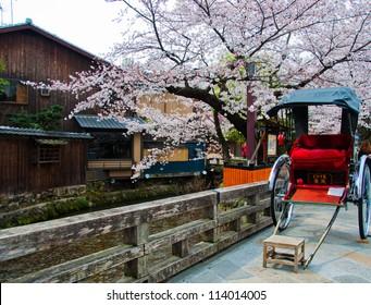 Japanese rickshaw with sakura in Gion district, Kyoto, Japan