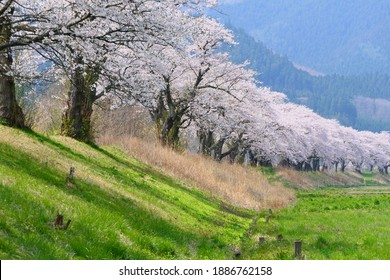 Japanese rural area in springtime.Tono,Iwate,Japan.Early May.