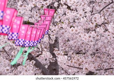 Japanese sakura blossom and paper lantern