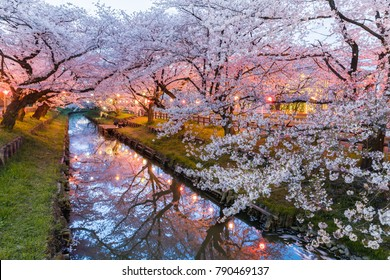Japanese Sakura cherry blossom with small canal in spring season
