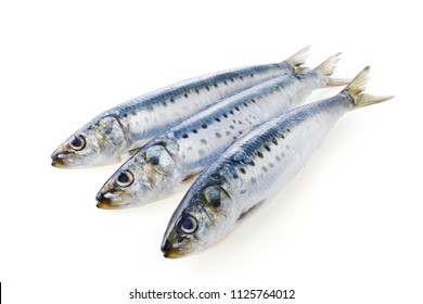 Japanese sardine image