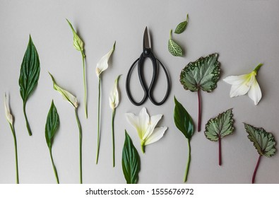 Japanese scissors for ikebana and leaves of indoor plants on a white background