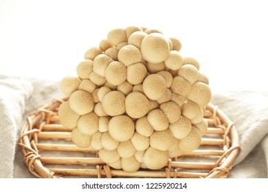Japanese Shimeji mushroom