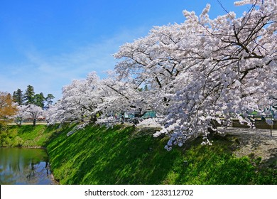 Japanese spring.Cherry blossoms along the Tsurugajo Castle Park Moat.Aizuwakamatsu Fukushima Japan.Late April.