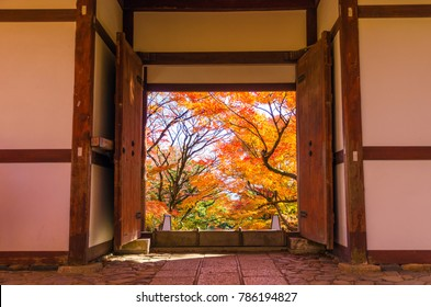 Japanese style entrance wooden door or gate to beautiful colorful Japanese maple garden in colorful autumn & buddhist Door