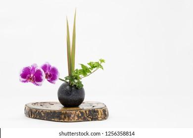 Japanese style flower arrangement ikebana isolated on white background.
