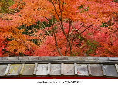 japanese style roof in a temple with colorful maple leaves