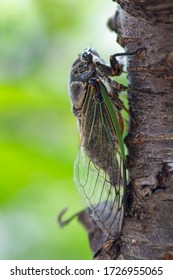 Japanese summer insects, cicada, stink bug