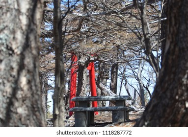 A Japanese torii - or gate marking an entrance to a shrine - is seen among some trees. The branches of the trees are bare. A stone seat is in the foreground.