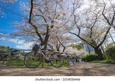 A Japanese tourist's bicycle is parked in a Chidorigafuchi park with blooming Sakura trees. The beauty that occurs during March to mid-April each year in Tokyo, Japan.