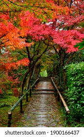 Japanese traditional garden covered by moss with fall colors, Kyoto, Japan