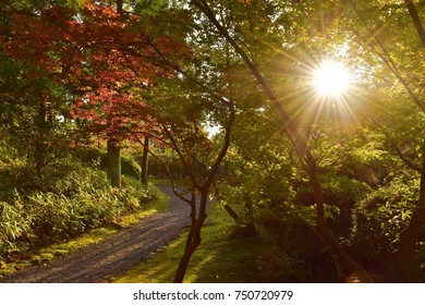 Japanese traditional garden scenery under sun light in evening with autumn red leaves