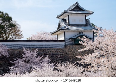 Japanese traditional stone wall with Sakura trees full bloom soft pink infront,  against soft blue sky background, white Kanazawa castle on high Japanese stone wall in spring ,in Japan.