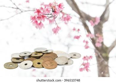 japanese yen coins on sakura tree background