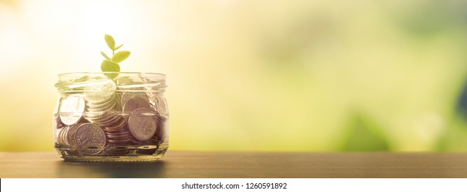 Jar with coins. Plant sprout grows in the jar. Budget, saving money concept with copy space for web banner