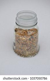 jar of seeds in snow