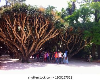 Jardin d'Essai du Hamma, Algiers, Algeria - May 7, 2014: A group of students with their teacher inside the garden.