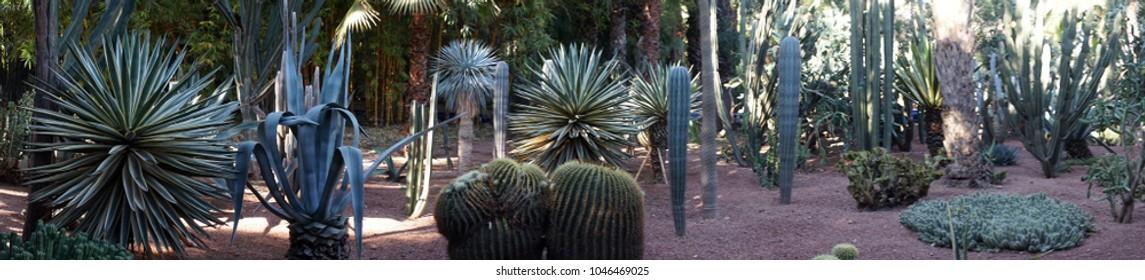Jardin Majorelle Cactus Garden Marrakech in Morocco