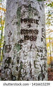 JARFALLA, SWEDEN - OCTOBER 26, 2014: Closeup of a birch tree trunk with old engraving writings, names and signs in Jarfalla Sweden October 26, 2014.