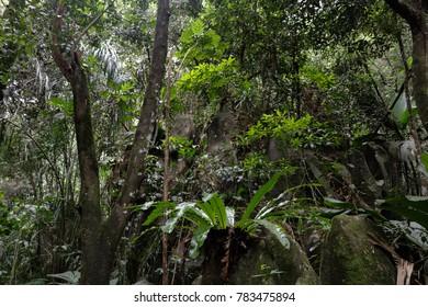Jasmin mountain forest. Seychelles