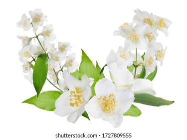 jasmine design with flowers isolated on white background