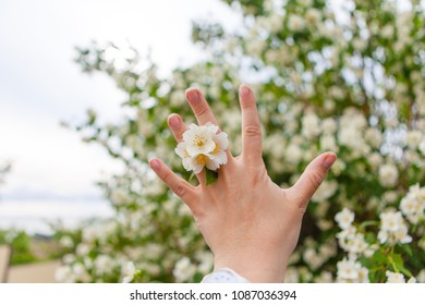 Jasmine flower in a female hand on a white-green floral background