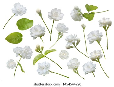 Jasmine flower isolated on white background, symbol of Mother's day in thailand