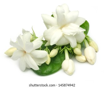 Jasmine flower with leaves