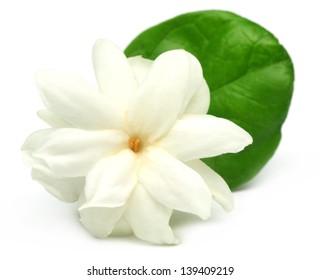 jasmine flower images stock photos vectors shutterstock