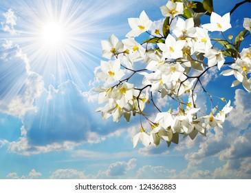 Jasmine flowers against the blue sky