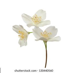 Jasmine flowers isolated on a white background