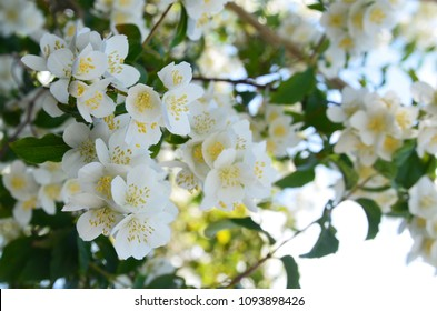 Jasmine flowers are a symbol of feminine sweetness, kindness and beauty. They also symbolize deep affection and happiness.