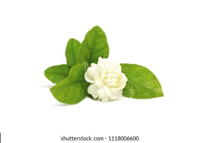 Jasmine with green leaf have water drop on white background and Clipping Path for Mother's Day concept
