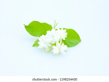 Jasmine isolated from a white background.