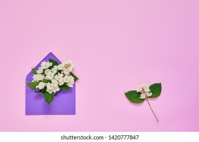Jasmine, Philadelphus or mock-orange flowers in violet envelope on pink pastel background. Flat lay of Birhday, Mothers Day, bachelorette, Wedding concept. Copy space, top view.