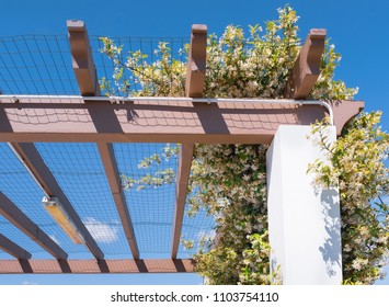 Jasmine plant in full bloom with white flowers growing, creeping over the mesh of a car port pergola to provide shade from the sun in Spain