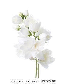 Jasmine's (Philadelphus) flowers isolated on white background.