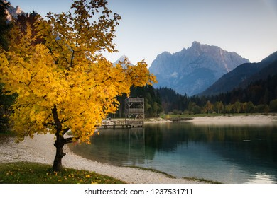 Jasna Lake, Slovenia during fall foliage with a tree full of yellow leaves on the back of Julien Alps