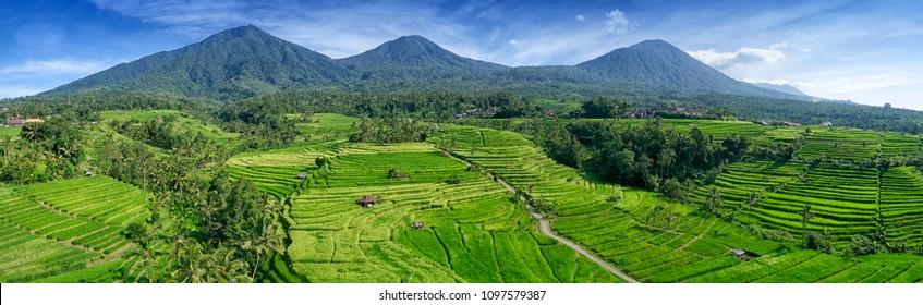 Jatiluwih Rice Terrace Bali, Indonesia