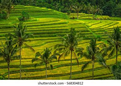 Jatiluwih Rice Terraces - Bali, Indonesia