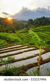 Jatiluwih Rice Terraces and Green Farm Land in Bali, Indonesia