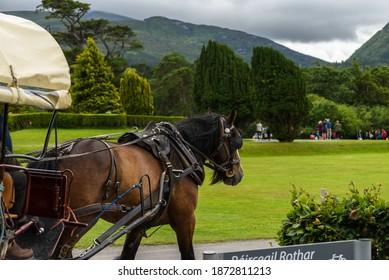 Jaunting car in Killarney National Park, near the town of Killarney, County Kerry, Ireland