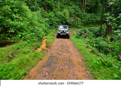 Jeep in jungle