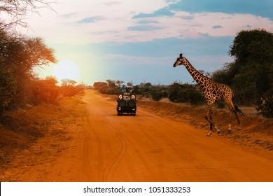 A jeep stops while a Giraffe crosses the road during a Safari in Kenya, with the sunset lights creating a breathtaking atmosphere