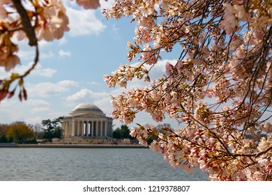 The Jefferson Memorial behind cherry blossoms on the Tidal Basin in Washington, DC.