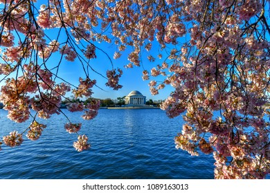 Jefferson Memorial and cherry blossoms at the Tidal Basin during spring in Washington, DC.