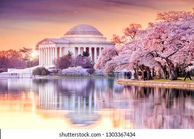 「桜のお祭り」のジェファーソン記念碑ワシントンDC